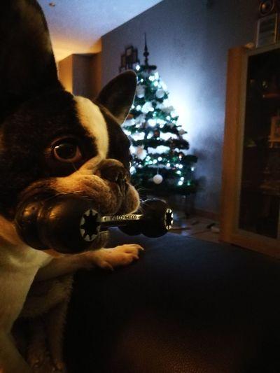 Christmas season with my dog Christmas First Eyeem Photo