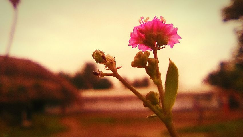 Morning click Wid Mah Phone Outdoors In Bloom Beauty In Nature Flower Nature