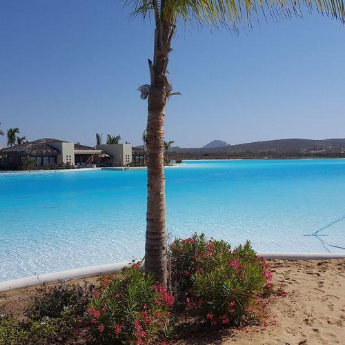Tree Water Flower Clear Sky Sea Palm Tree Beach Blue Sand Luxury