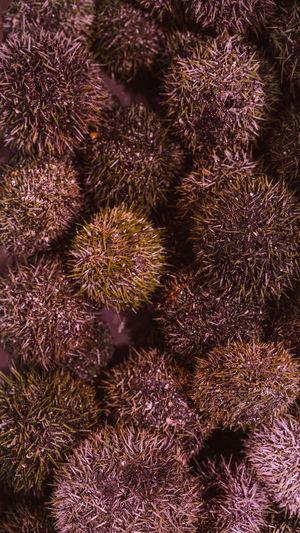 Full frame shot of sea urchins for sale