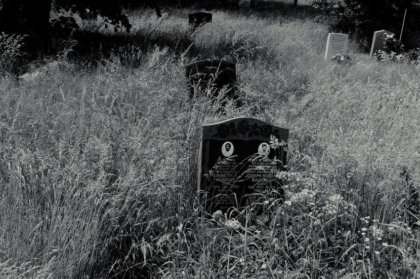 Black Color Cemetary Day Documentary Phototography Reportage Taking Photos Fotos Black And White Monochrome Field Grass Grasses In The Wind Grassy Growth Headstones In A Row Mammal Nature No People Outdoors Plant Portrait Reportage Images Taking Photos Photography From My Point Of View