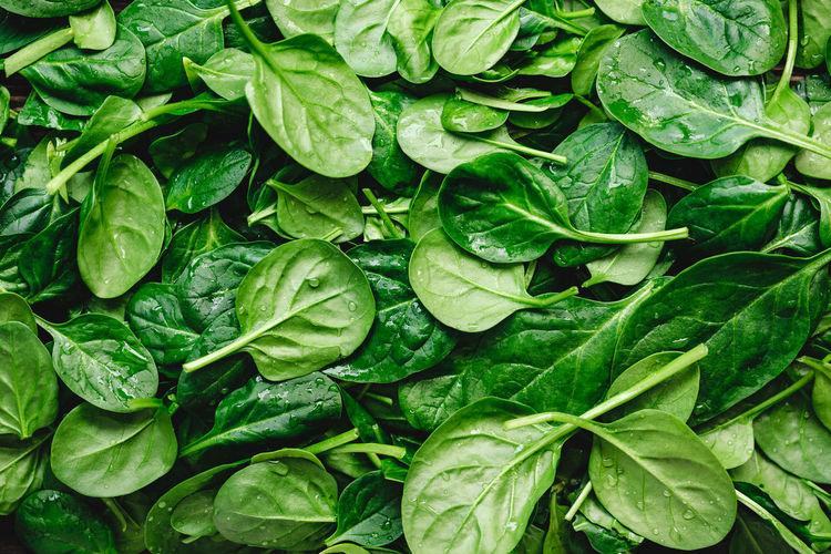 Full frame shot of wet spinach