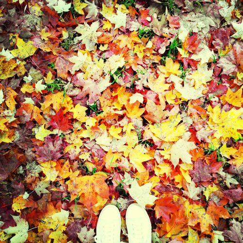 Autumn Colors Autumn Leaves Lookingdown Fall Beauty Pattern Pieces