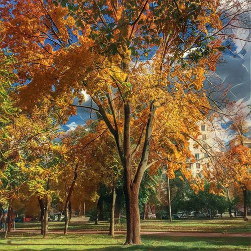 Autumn Tree Season  Tranquil Scene Tadaa Community Prisma Moscow Golden Autumn