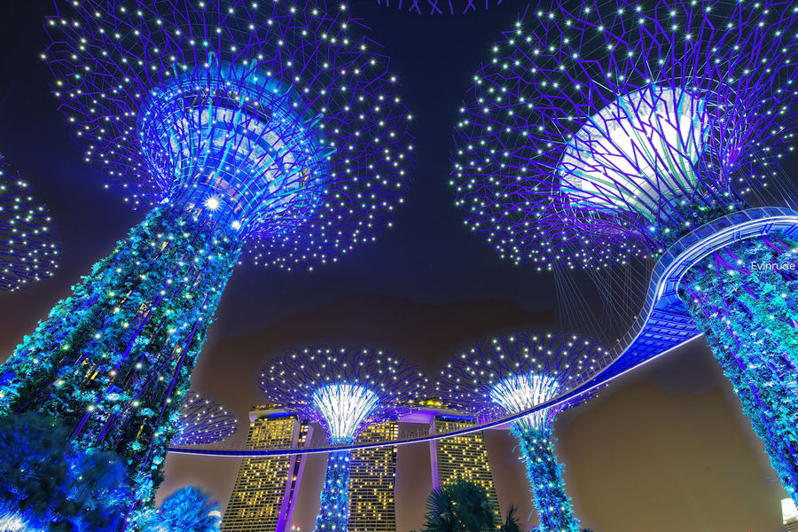 Supertrees. Pentax PENTAX K-1 Pentax 15-30 F/2.8 Wide Angle Long Exposure Waterfront City Cityscape Singapore Gardens By The Bay Marina Marina Bay Sands Illuminated Night Clouds LED Blue Architecture Blue Illuminated Indoors  Multi Colored Night No People Low Angle View