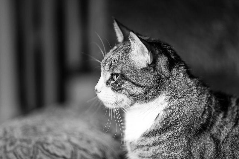 Cat Again.