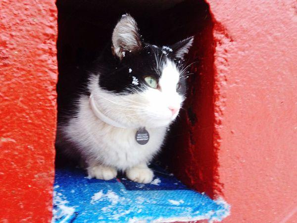❄️Феликс, кот потерявший свой дом!❄️