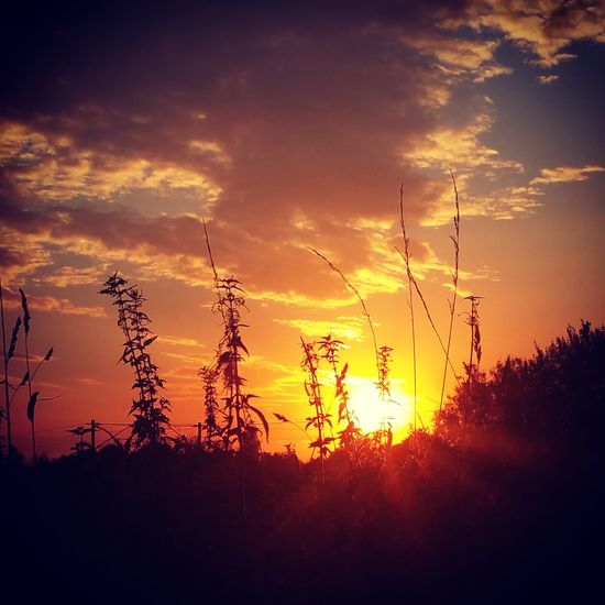 I'm looking forward... Beautiful Rays Of Light View Beauty In Nature Cloud - Sky Evening Evening Sky Field Nature No People Outdoors Scenics Silence Silhouette Sky Summer Sunlight Sunset Tranquil Scene Tranquility