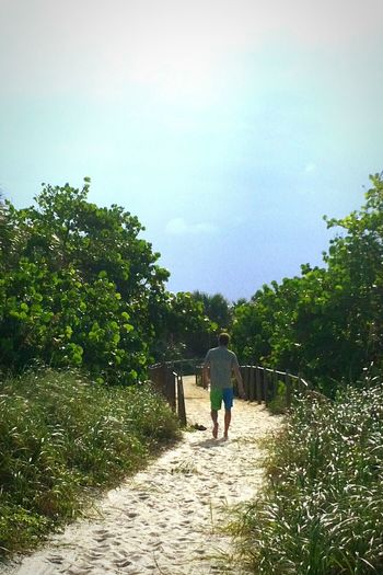 Beach sand pathway Full Length People Walking Adult Outdoors Nature Men Standing Day Trail Seagrapes