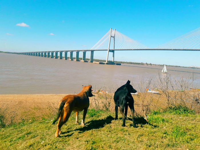 View of dogs on bridge against sky
