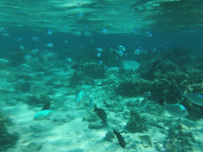 마하가나섬의 바닷속.. 사이판 마하가나섬 Mahagana Island Under The Sea