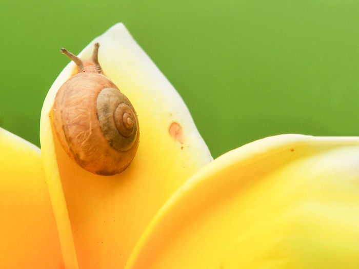 snail, snail above the mushroom on a green background Close-up Animal Themes Insect Flower Head Blooming Animal Shell Pollen Ant Pollination Dragonfly Bumblebee Bug Grasshopper Butterfly - Insect Symbiotic Relationship Gastropod Butterfly Animal Antenna Praying Mantis Caterpillar Ladybug Honey Bee Beetle Damselfly Snail Shell Mollusk Animal Wing Moth Seashell