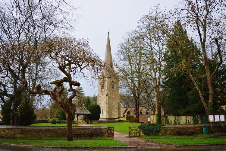 Tree Religion