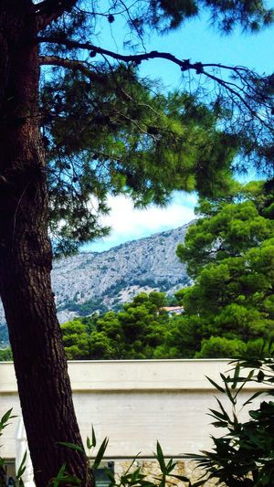 Pinetree Croatia Brela  View Mountains Sky Green Color Idyllic Vegetation Scenics Tranquil Scene Remote Relaxing Moments Flora