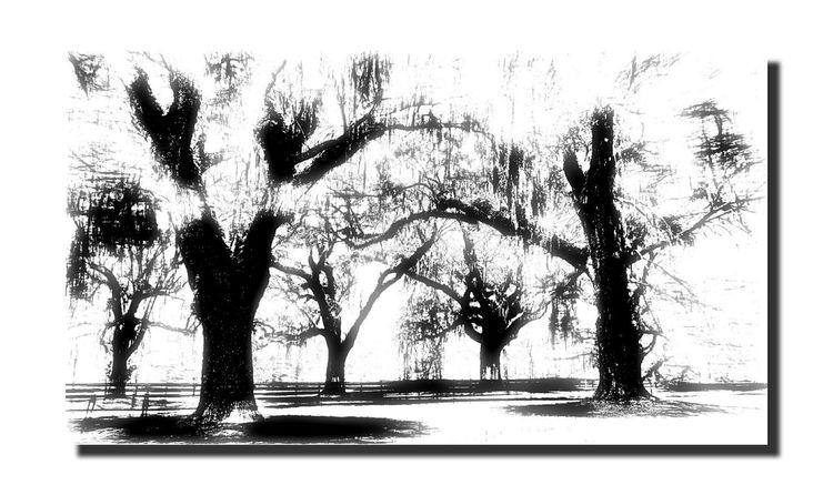 Spanish Moss Liveoak Oak Trees Boonehallplantation Plantation Charleston Southcarolina Blackandwhite Photography Abstract ArtWork