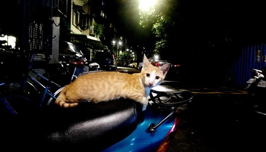 Night Cat Streetphotography Urban Exploration City Wild Life Alley Cat 街貓 The Innovator Cat Cat Watching Street Cat Lifestyles Laying The Mix Up Always Be Cozy Pet Portraits
