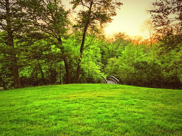 Lakewood Nj Grass Green Field With Trees Wooden Bridge Grassy Hill Eyeem Collection