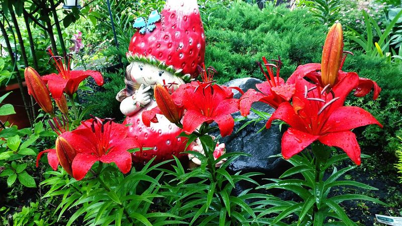 Garden Lily Red Lily Flower Flowers Strawberry Statuette Red Hello World Today :)
