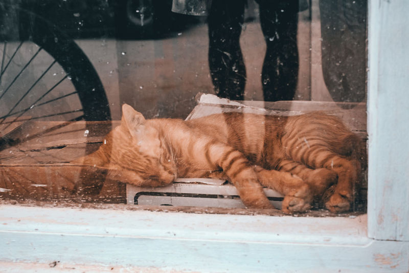 Animal Themes Bycicle Cat Comfortable Day Domestic Animals Domestic Cat Double Exposure Frame Ginger Cat Grunge Mammal Moment Newspaper No People One Animal Peaceful Pets Quiet Reflection Sleeping Streetphotography Tiger Vintage Window
