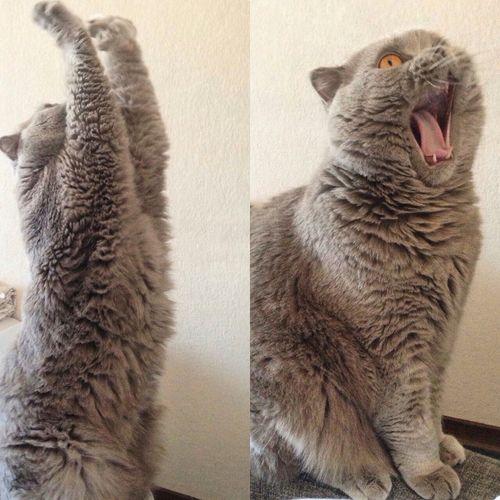 Кот Семен🙀