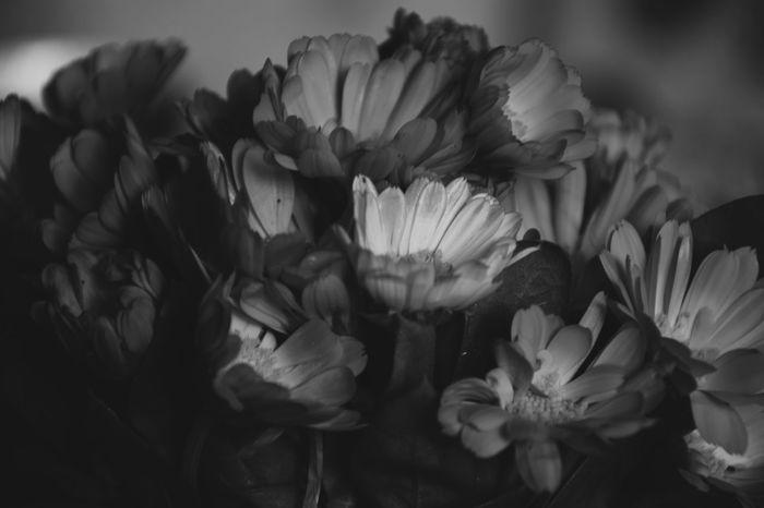 Somedays I am the flower , somedays I am the rain Flower Flower Head Freshness Beauty Fragility Black & White Blackandwhite Bnw_collection The Week On EyeEm EyeEmNewHere Nikond3300 EyeEm Best Edits Nikonphotography Day Dreaming Analogue Photography Filmphoto 105mm EyeEm Best Shots