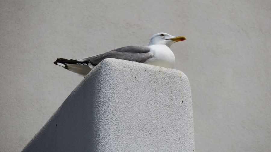 Low angle view of seagull perching on retaining wall