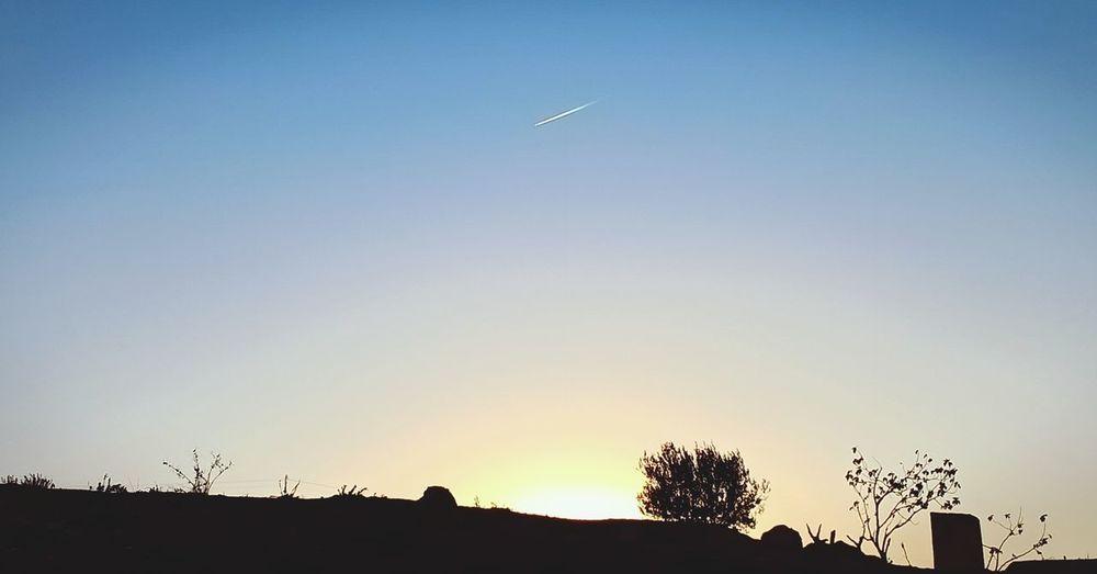 Tree Airplane