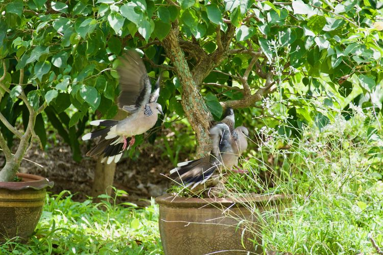 Plant Nature No People Day Growth Plant Part Animal Themes Animals Birds Pigeons Two Pigeons Mating Pigeons