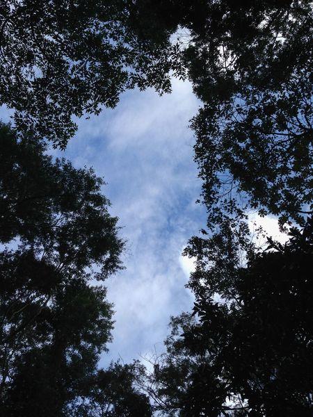 Olhando pro céu antes de encarar a trilha para a Pedra Bonita Rio De Janeiro Brasil Brazil