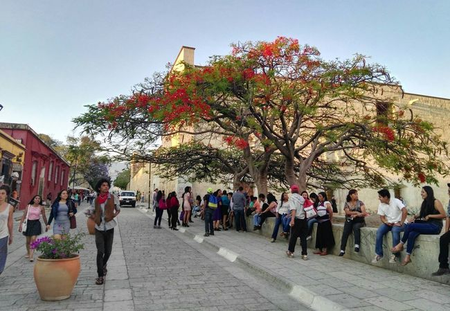 Neighborhood Map Oaxaca De Juárez Plaza Santo Domingo Tree City View  Outdoors Architecture