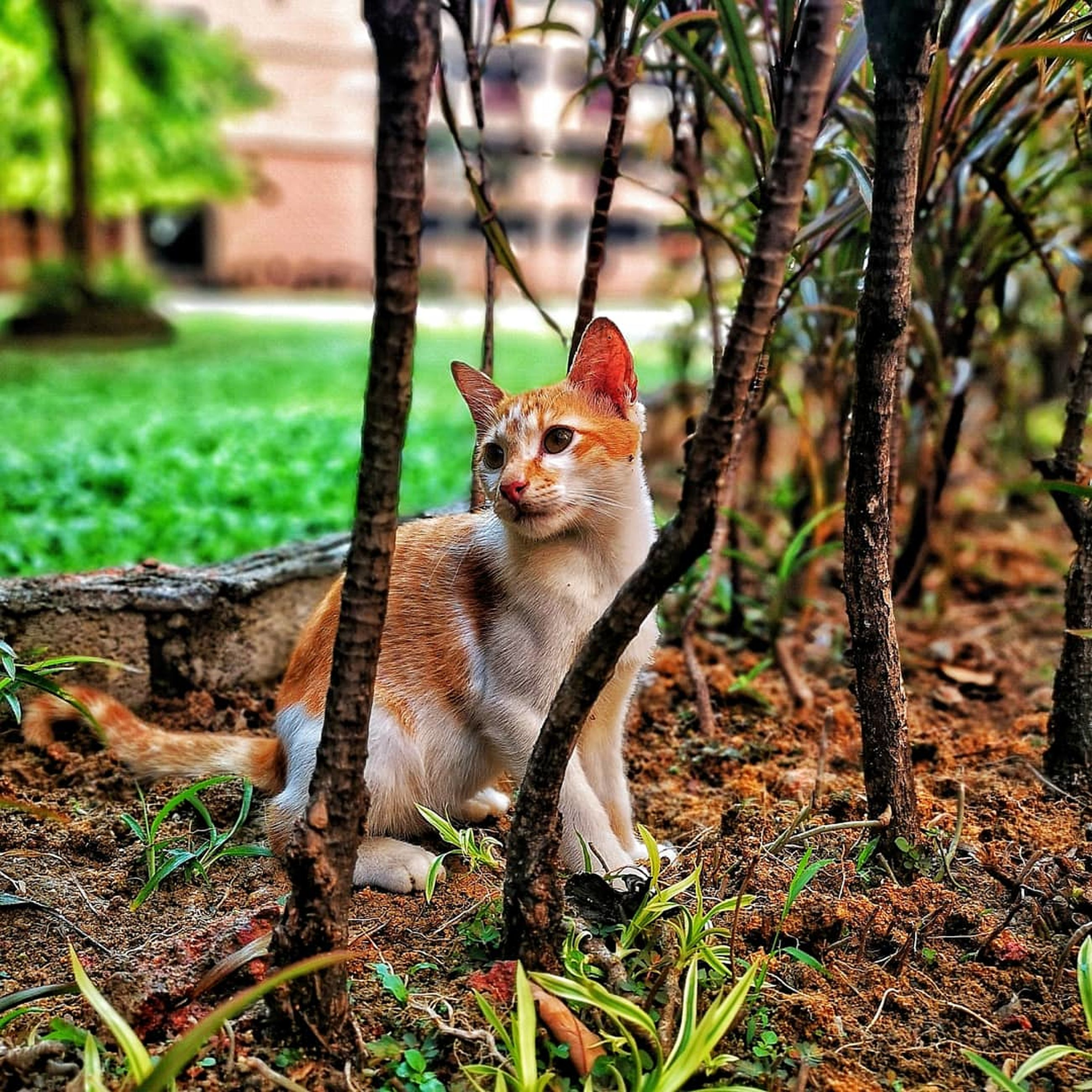 one animal, animal themes, mammal, domestic, domestic animals, animal, pets, domestic cat, cat, feline, plant, land, vertebrate, looking away, looking, nature, tree, no people, sitting, day, whisker