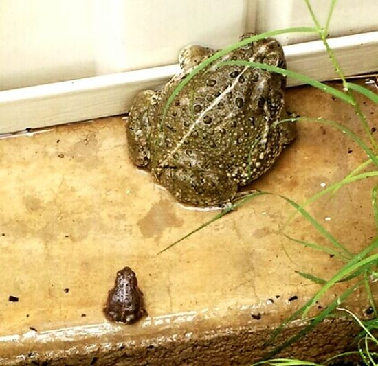 Big N Small 🐸frog Stalking Nature On Your Doorstep Country Girl Country Life
