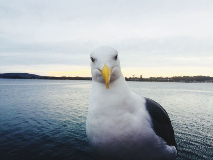 EyeEmNewHere One Animal Bird Animal Themes Animals In The Wild White Color Animal Wildlife Sky Nature No People Day Seagull Outdoors Close-up Beak Beauty In Nature Sea Water Swan