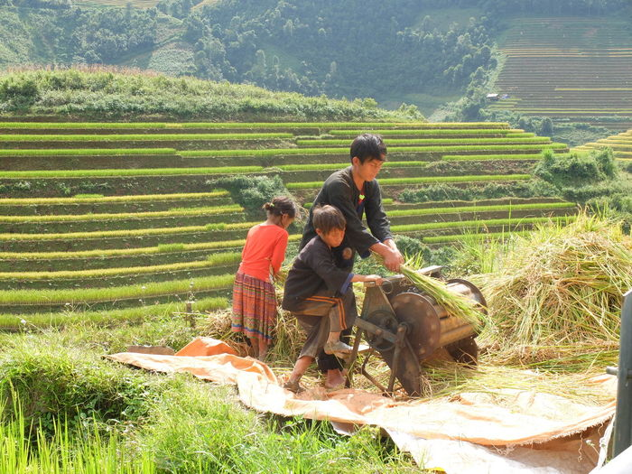 Children Agriculture Child Childhood Farm Fatherandchild Landscape Mucangchai Vietnam Rice Paddy Working