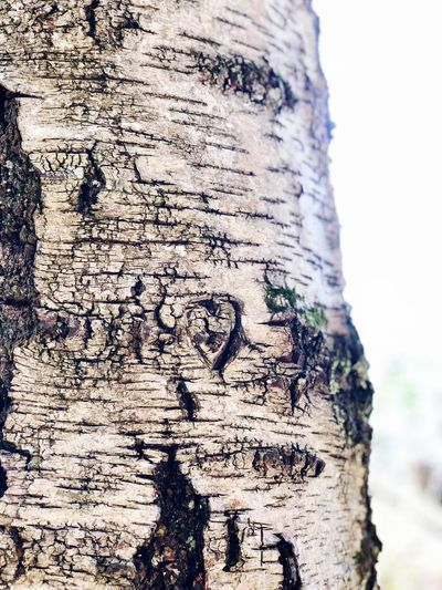 ❤️ Close-up Nature Day Outdoors Tree Trunk Focus On Foreground No People Art And Craft