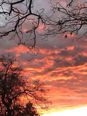 Sunset Sky Beauty In Nature Tree Cloud - Sky Orange Color Nature Branch Tranquility No People Silhouette Romantic Sky Tranquil Scene Outdoors Dramatic Sky Scenics Close-up Best Sunrises And Sunsets No Filter, No Edit, Just Photography IPhoneography Copy Space Backgrounds