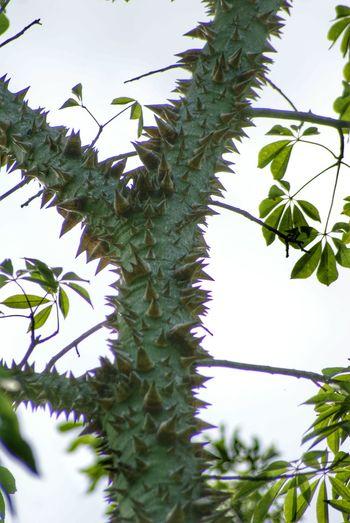 (The 'Hug me' Tree) Treegasmic Tuesday Treetastic Beautiful Bark Streamzoofamily