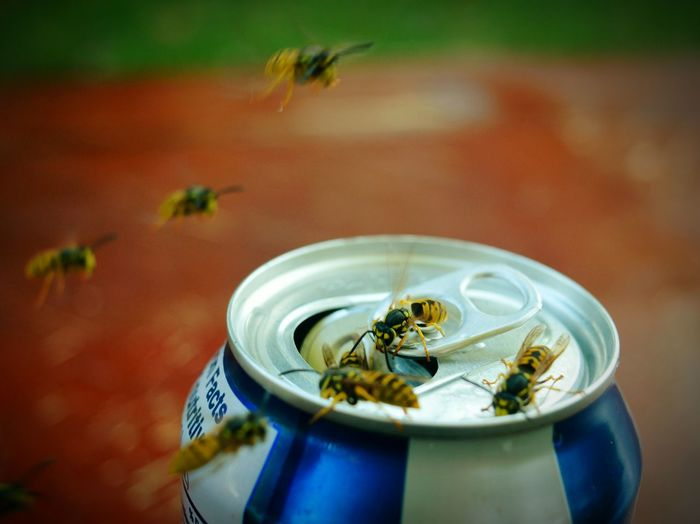 Close-up of wasps around drink can on table