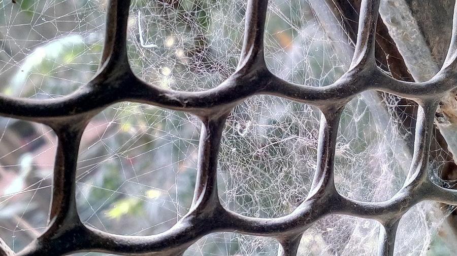 Maximum Closeness Symmetrical Net Pattern, Texture, Shape And Form Close-up Indoors  Day Mobile Photography Spider Web SSClickpix SSClicks SSClickPics