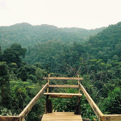 Tree Nature Forest Outdoors Landscape Tranquil Scene Tranquility Beauty In Nature No People Mountain Day Sky Eco Tourism Thailand Doisaket Chiang Mai | Thailand