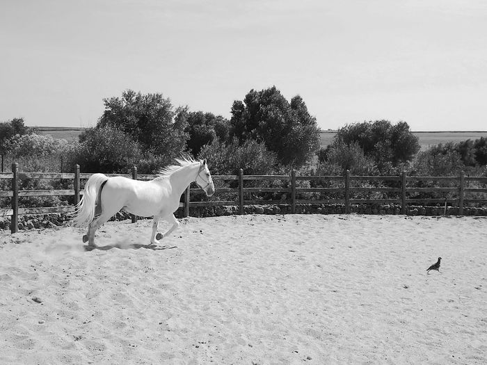 Horse Domestic Animals One Animal Pets Animal Animal Themes Mammal Sky Outdoors Day Tree Nature No People Pet Portraits