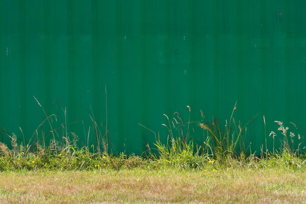 GRASS GROWING ON FIELD