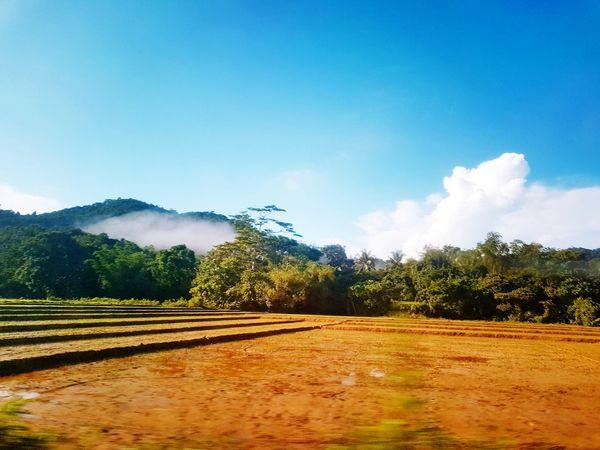 Rural Scene Mountain Scenics Beauty In Nature Farmland ladyguide_palawan naturalartstravel