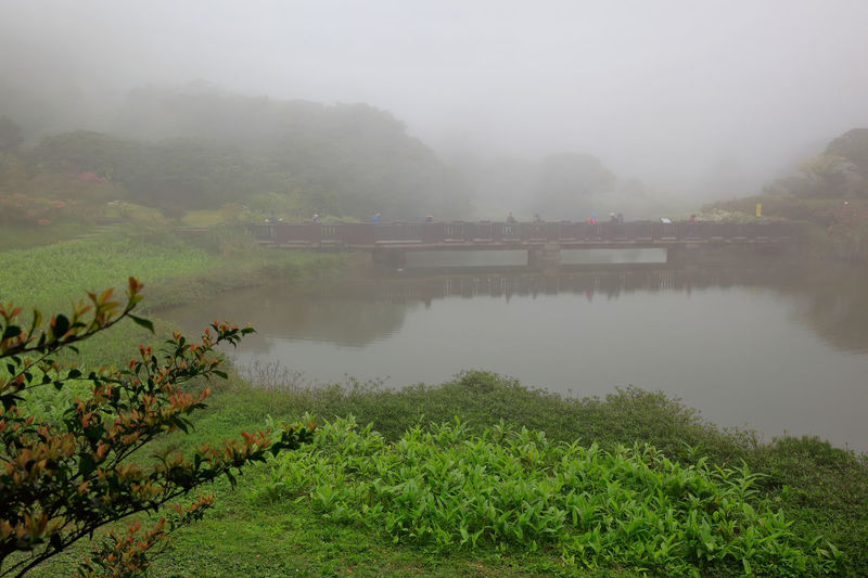 Fog Plant Water Tree Nature Tranquil Scene Tranquility Scenics - Nature Beauty In Nature Growth Green Color Day Lake Non-urban Scene No People Sky Idyllic Outdoors Hazy
