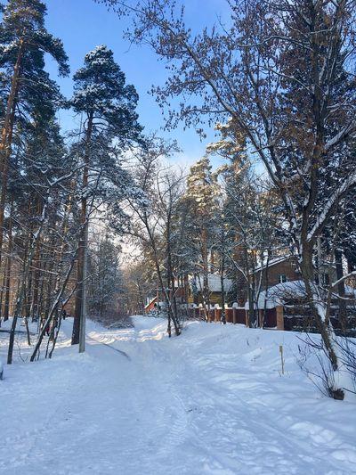 Snow Winter Tree Season  Nature Snow Covered Non-urban Scene Russia