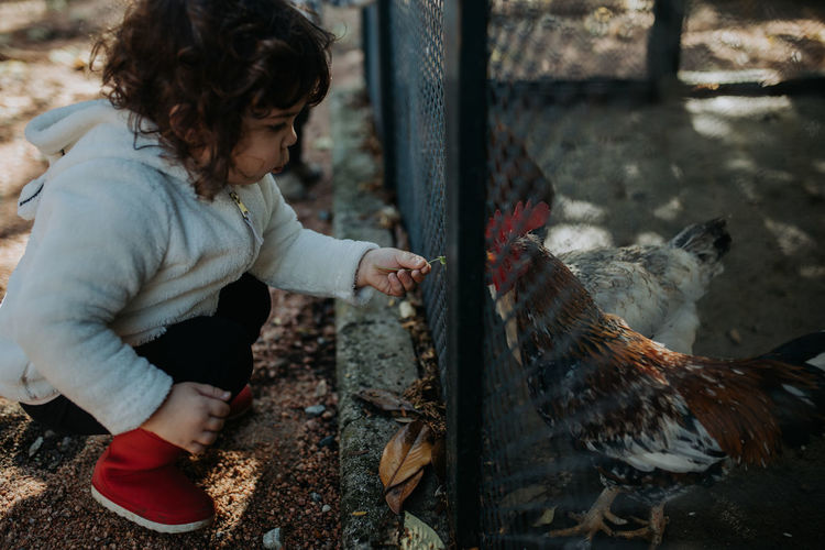 Rear view of child looking at bird