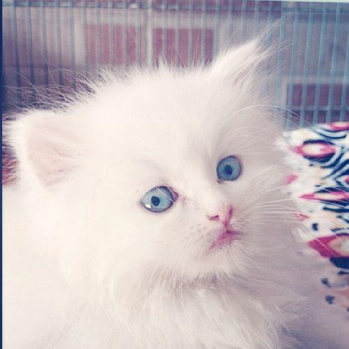 Miss U PINKY Pet
