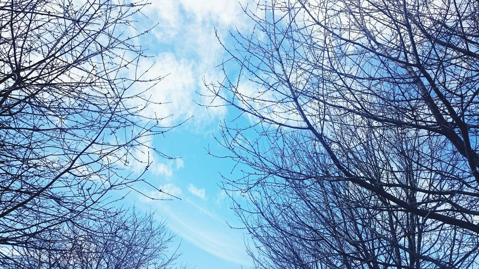 Bare Trees brush strokes of Clouds Blue Sky Nature Open Edit A Walk In The Park