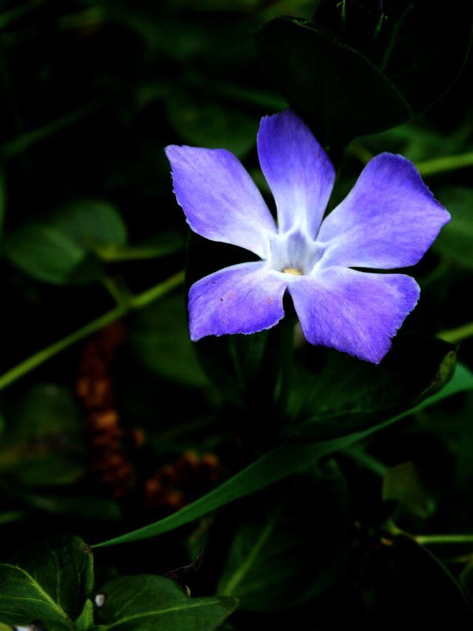 flower, petal, growth, flower head, fragility, beauty in nature, freshness, nature, plant, blooming, no people, close-up, outdoors, day, leaf, crocus