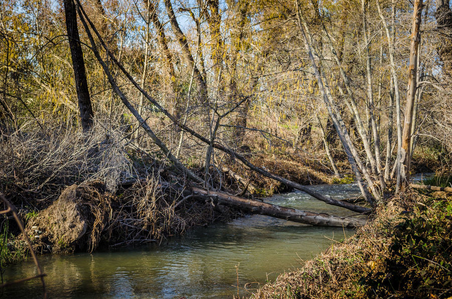 It was a nice sunny day to take some fresh new photos. Here's one of Willow Creek in Folsom near Blue Ravine. Beauty In Nature Creek Creeks Day Fallen Tree Lake Landscape Log Nature No People Outdoors River Scenics Tranquil Scene Tranquility Tree Water